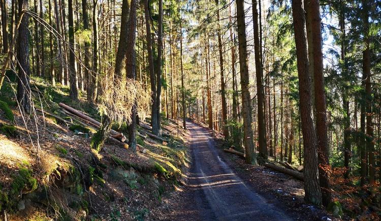 Rückweg durch den Wald (© Tanja Mittermair)