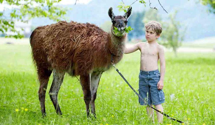 Kind mit Lama in der Wiese. (© Gaderer)