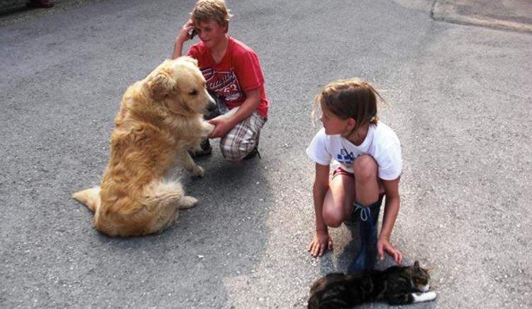 Hund und Katz freuen sich über Streicheleinheiten (© Bürtlmair)