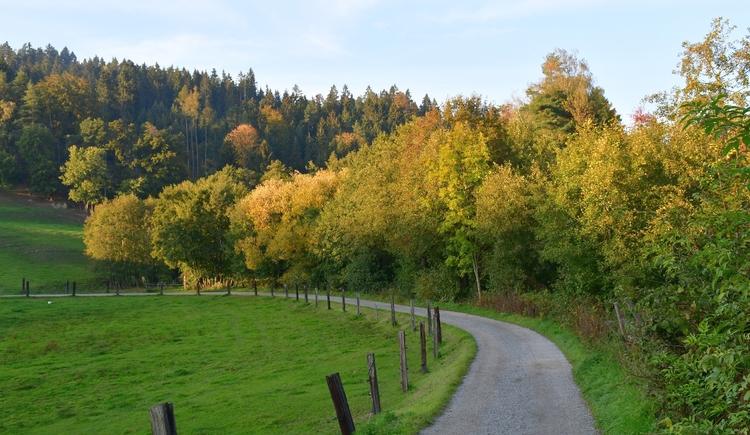 idyllische Wälder am Weg (© Johann Stadler)