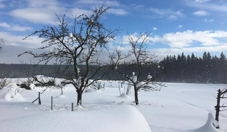 Landschaft im Winter 4 (© Privat)