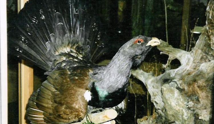 Vogelmuseum - Auerhahn (© Ferienregion Böhmerwald)