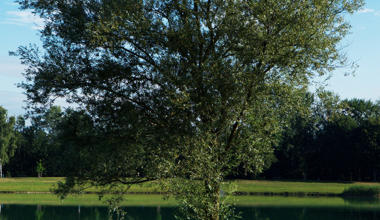 Badeseen Feldkirchen an der Donau (© TVB Feldkirchen/Rostfilm)
