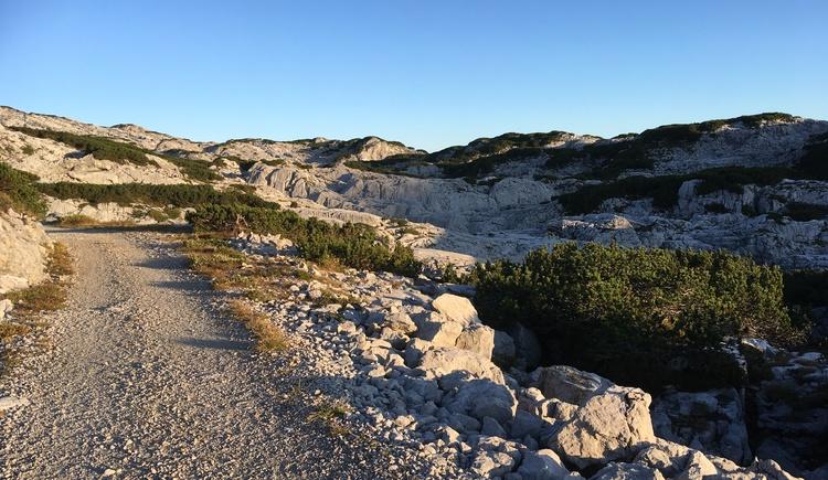 Familienfreundlicher, leicht begehbarer Wanderweg bei strahlend blauem Himmel. (© Ferienregion Dachstein Salzkammergut)