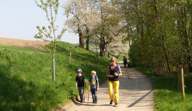 Baumbl%c3%bcte 2017_12%c2%a9 Naturpark Obst-H%c3%bcgel-Land (© Naturpark Obst-Hügel-Land)