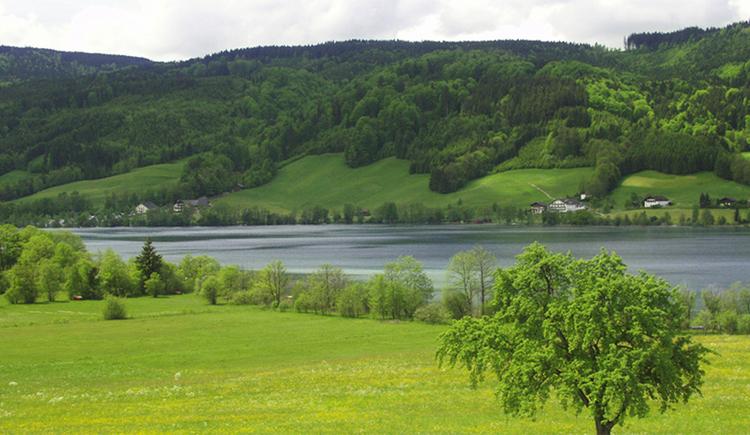 easterbank of Irrsee, landscape, lake. (© Tourismusverband MondSeeLand)