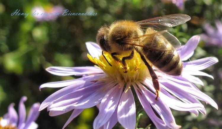 Honig von den eigenen Bienenvölkern (© kloiber)