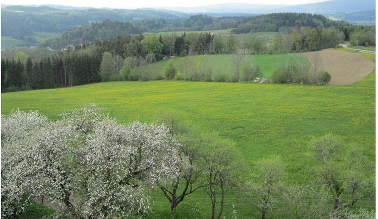 Frühling (© Privat)