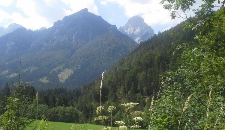 89556217 (© Schoisswohl)