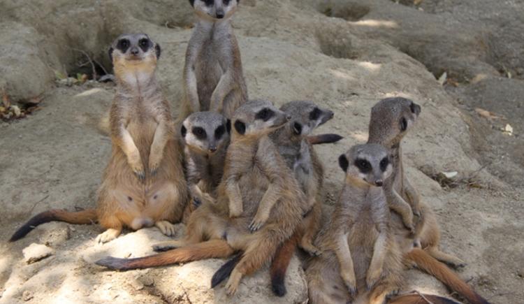 (© Zoo Linz)