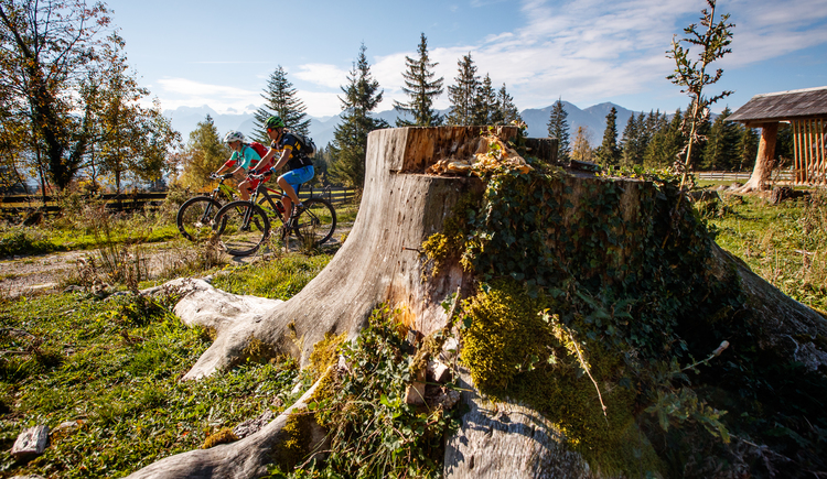 \nMountain biking through a picturesque alpine pasture where you can also take a short break to admire the Dachstein.