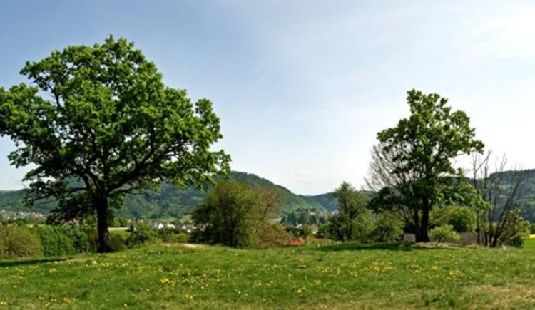 Panoramablick vom Rastplatz Mühlberg (© WGD Donau Oberösterreich Tourismus GmbH/Weissenbrunner)
