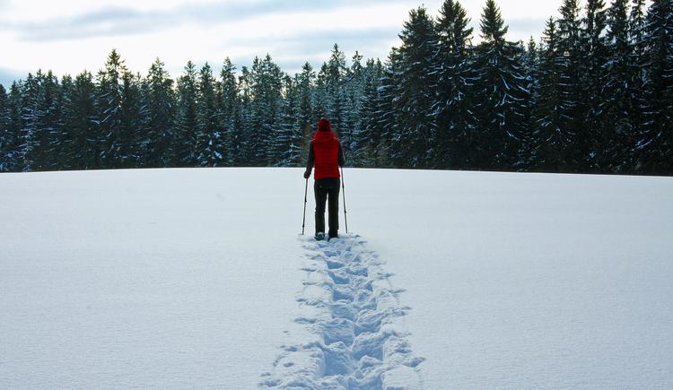 Schneeschuhwandern in Sandl (© Gemeinde Sandl)