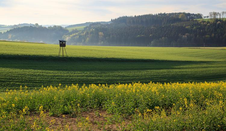 Gallspach Umgebung (© Tourismusverband Urlaubsregion Vitalwelt Bad Schallerbach / Mühlleitner)