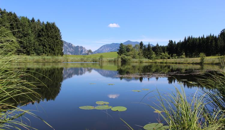 Blick auf den Hochmoorsee in Unterach am Attersee. (© Lisa Hemetsberger)