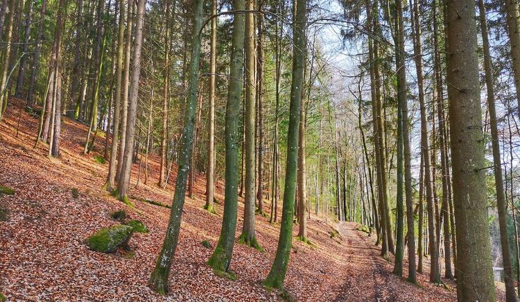 Weg durch den Wald (© Tanja Mittermair)