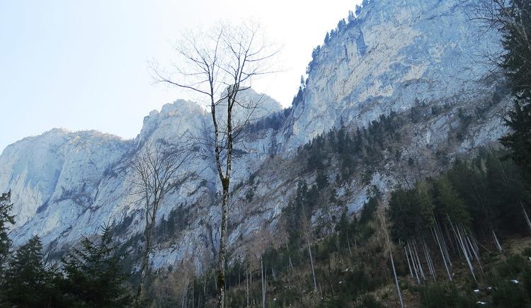 In den Wäldern am Fuße der Drachenwand.