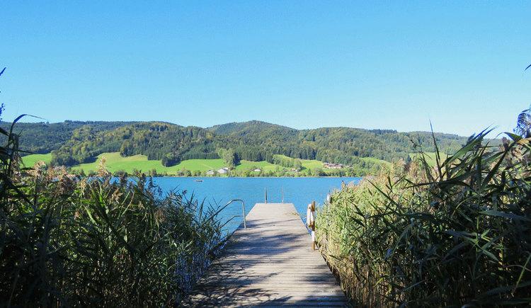 Steg am See, seitlich Schilf, am anderen Ufer sind Hügel und Wälder. (© www.mondsee.at)