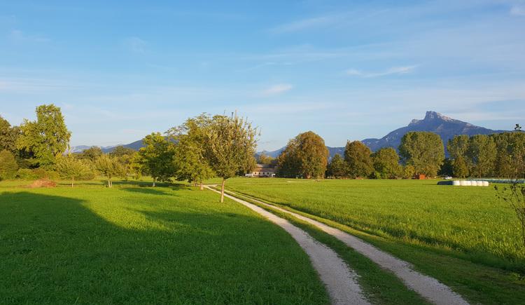 Wiesenweg mit Blick zum Schafberg in St. Lorenz.