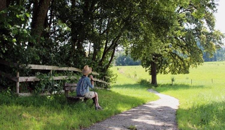 Heckenlehrpfad in St. Veit im Innkreis. (© LEADER-Region Mitten im Innviertel)