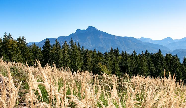 Wunderschöner Ausblick in der Nähe der Radstattkapelle gen Schafberg. (© TVB Mondsee-Irrsee)