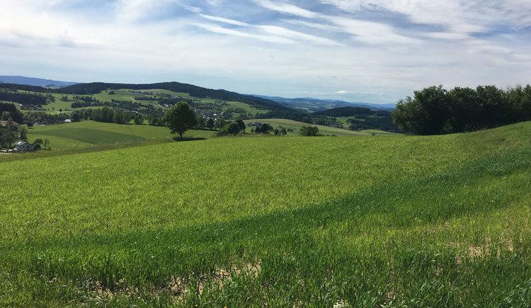 Landschaft bei Windhaag in Oberösterreich