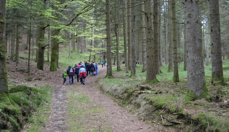 Kobernaußerwald_Innviertel Tourismus (© Innviertel Tourismus)