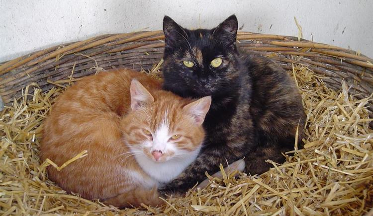 Unsere Katzen (© Rinnergut)