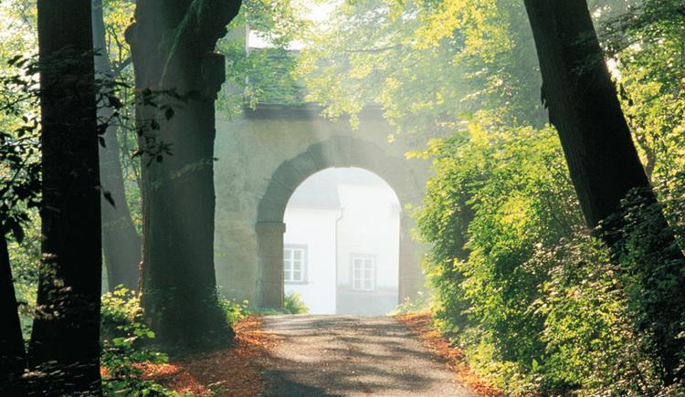 durch den Waldweg zur Burg Clam (© Burg Clam)