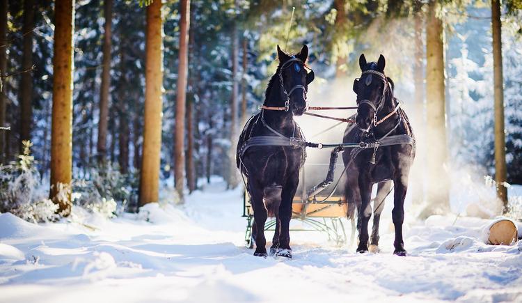 Pferdeschlitten-Reingruber-12-10-09 (© Reingruber)