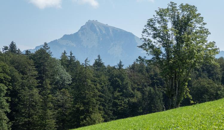 Weg Richtung 12er Horn - Blick auf den Schafberg (© CA)