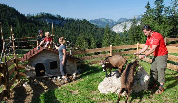 Kleiner Streichelzoo für die Kinder. (© Ferienregion Dachstein Salzkammergut)
