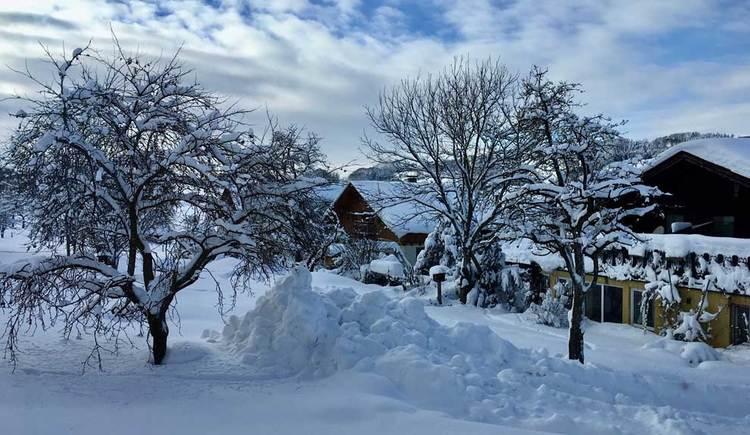 Winterlandschaft mit schneebedeckten Bäumen und Häusern im Hintergrund