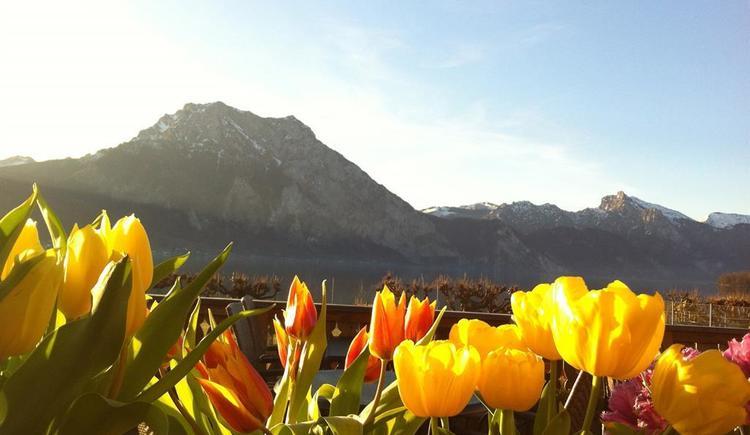 Frühling vom Schweizerhof (© Schweizerhof am See)