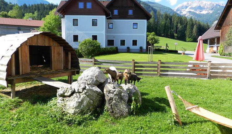 Ziegen auf der Weide (© Baby- und Kinderbauernhof Riegler)