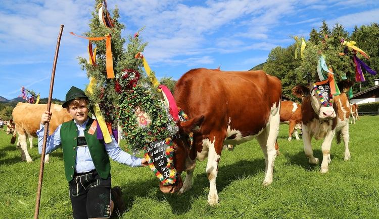 Wolfgangseer Almabtrieb beim Bauernhof \