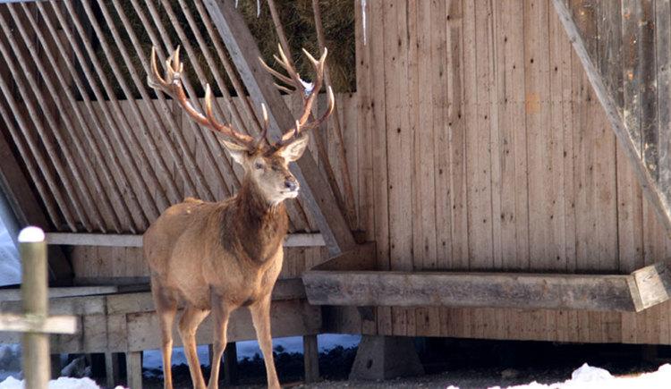 waldness-cumberland-wildpark (© Cumberland Wildpark)
