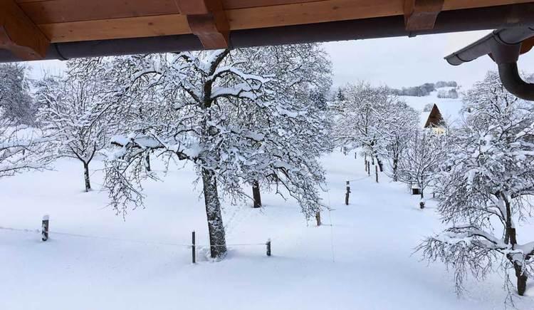 Winterlandschaft mit viel Schnee und schneebedeckten Bäumen