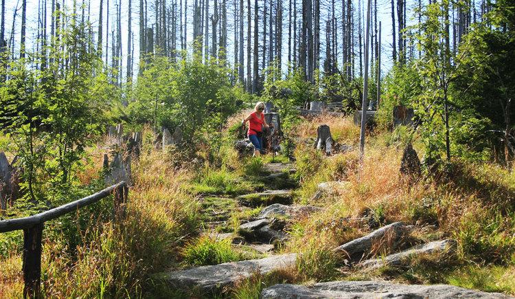Eine Dame mit rotem T-Shirt geht auf einem Steinpfad im Wald. (© Tourismusverband Ferienregion Böhmerwald)