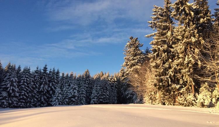 Aussicht vom Garten im Winter