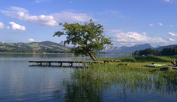 Fischhof. (© Rothner Tatjana)