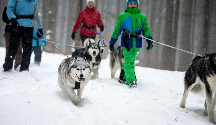 Huskies (© huskytraum.at)