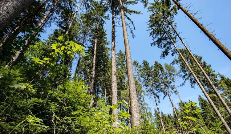 Waldschule Bäume (© Historicum Scharnstein, Foto Monika Löff)