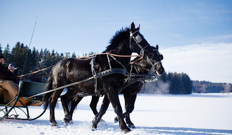 Pferdeschlitten-Reingruber-11-12-01 (© Reingruber)