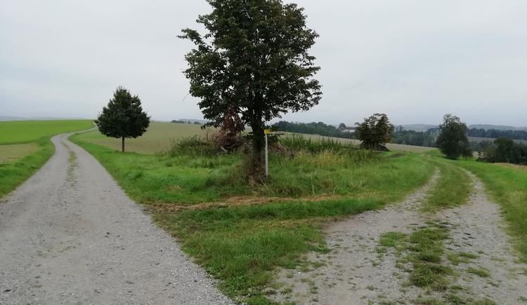 Vitalwanderweg in Ort im Innkreis. (© Innviertel-Tourismus)