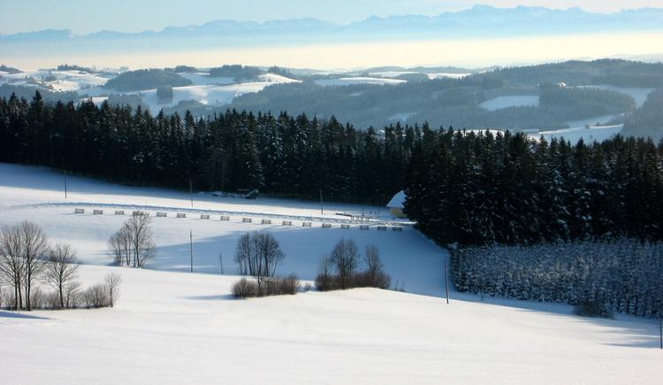 Winterimpression bei St. Oswald bei Haslach (© Schwarzmann)
