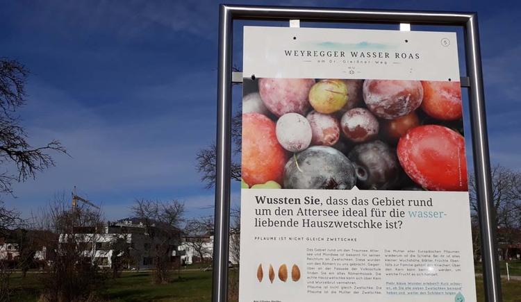 Weyregger Wasser Roas Zwetschke. (© Johanna Kiebler)