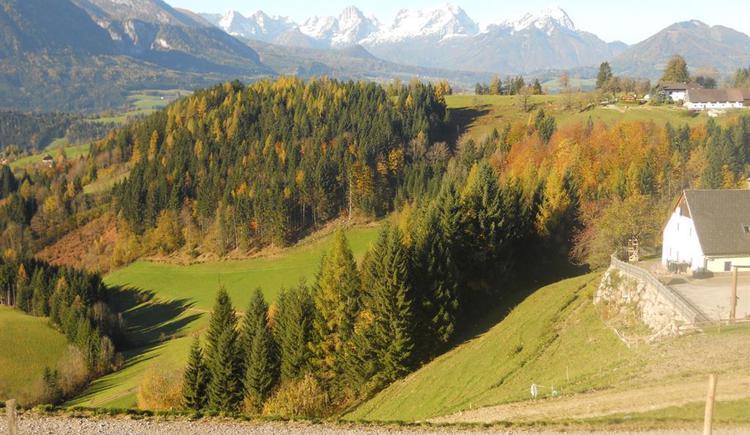 Herbstfärbung  und weiße Bergspitzen