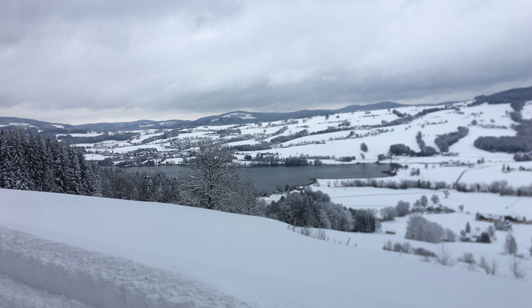 view at the snowy landscape