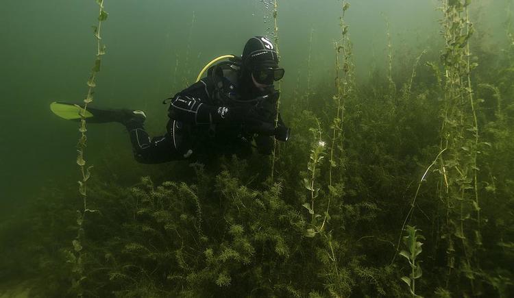 Adventure Diving (© Adventure Diving)